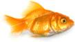 img-wp-fishy